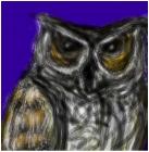 owl kinda