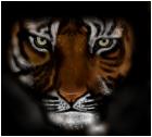 tiger :p