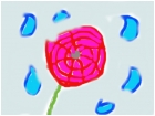 a rose and rain