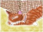 My cat Twinkie