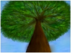 Tree from bottom veiw