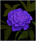 I Once had a Lavender Rose