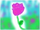 a rose in a rose garden