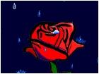 rose,rain