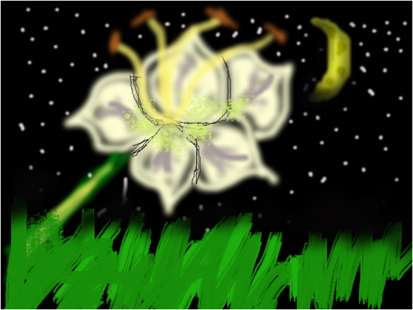 A Lilly in the moon light!